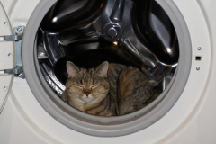 Sửa máy giặt Electrolux tại Chợ khâm thiên mở cửa liên tục 24/7