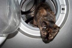 Sửa máy giặt Electrolux tại quốc lộ 32, Dịch vụ sửa tại nhà 24/7